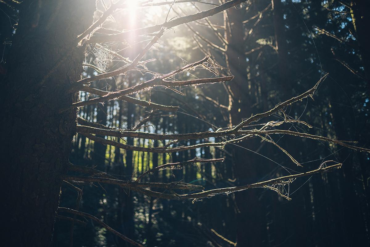 USA-Kanada-PNW-Pazifischer-Nordwesten-Landschaftsfotografie-Niklas-Coen-Fotografie-Aachen (36)